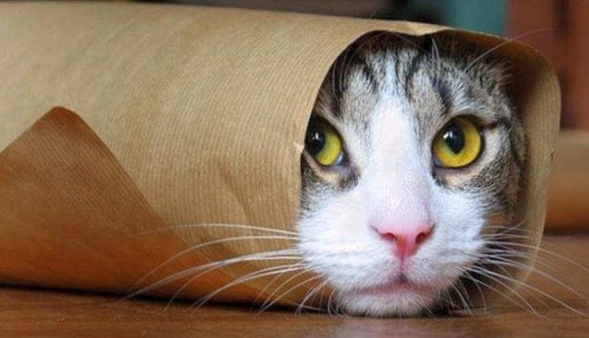 Немного про котиков…